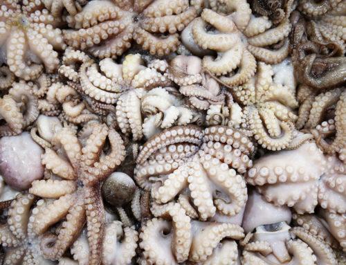 Octopus, Kalmar &Co.